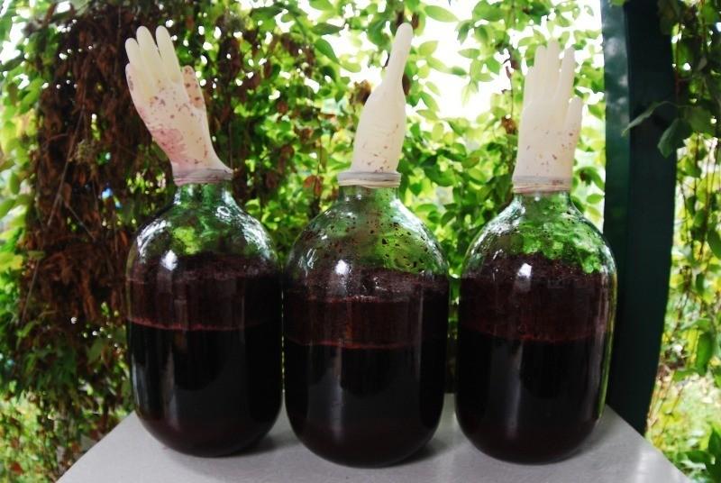 Простые рецепты домашнего вина из черноплодной рябины