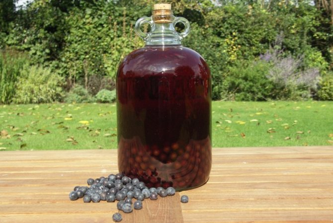 7 рецептов домашнего вина из ирги в домашних условиях